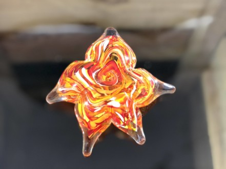 starfish byo